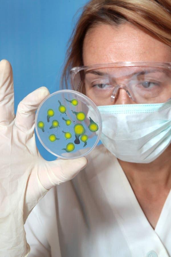 Microbiologia imagem de stock