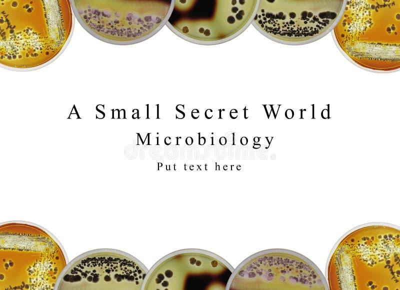 Microbiologie de fond de présentation de PowerPoint, boîte de Pétri et images libres de droits