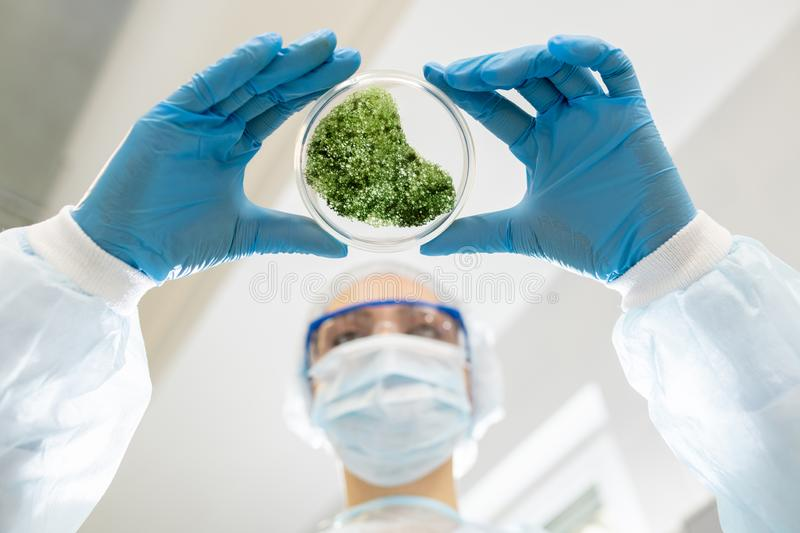 Microbiologist analyzing green substance royalty free stock image