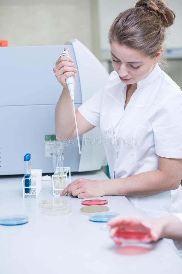 Microbiologist with pipette preparing samples royalty free stock images