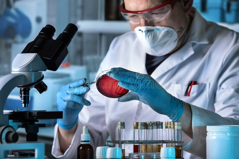 Lab Technician Working With Petri Dish For Analysis In The