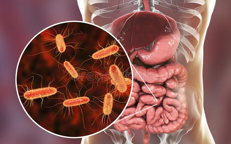 Microbiome intestinal, Escherichia coli illustration de vecteur