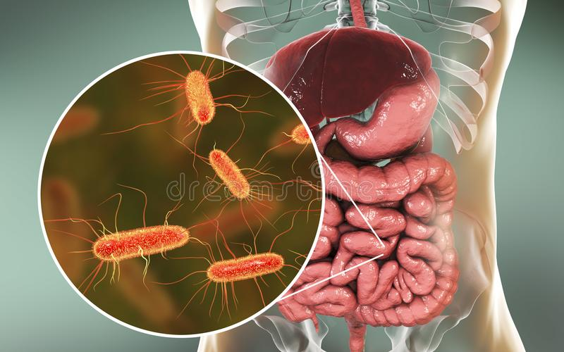 Microbiome intestinal, Escherichia coli illustration stock