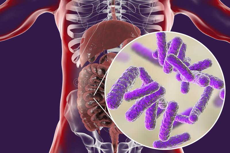 Microbiome intestinal, opinión del primer bacterias entéricas stock de ilustración