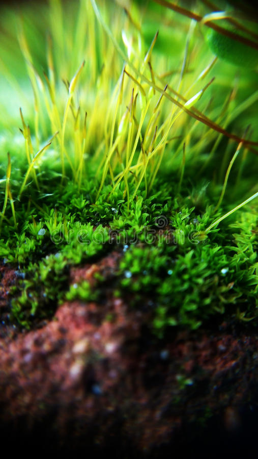 Microcosm royalty free stock photography
