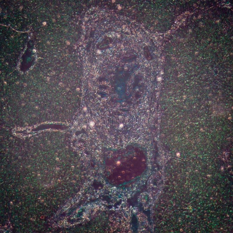 Micrograph wątrobowa tkanka zdjęcia royalty free