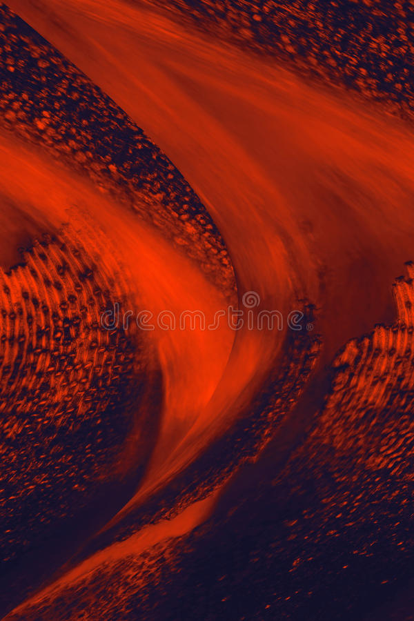 Micrographe coloré et abstrait des feuilles de mousse photos stock