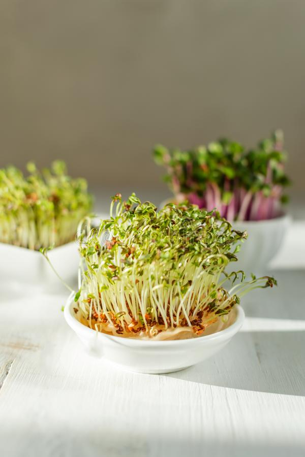 Microgreen kress, pink radish sprouts on white wooden background in trendy hard direct sunlight, deep shadows, copy space royalty free stock photos