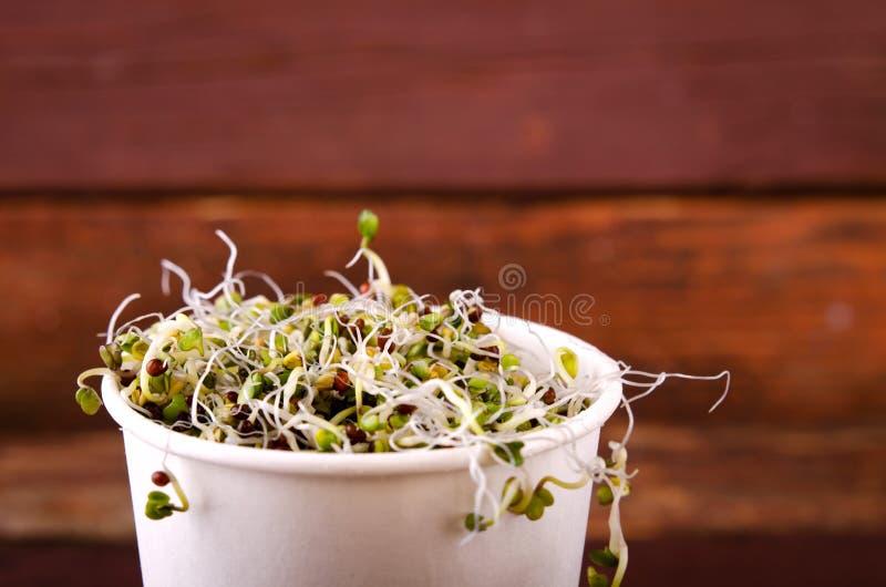 Microgreens asortyment w papierowej filiżance Zdrowa Zielona sałatka z świeżymi surowymi flancami fotografia stock