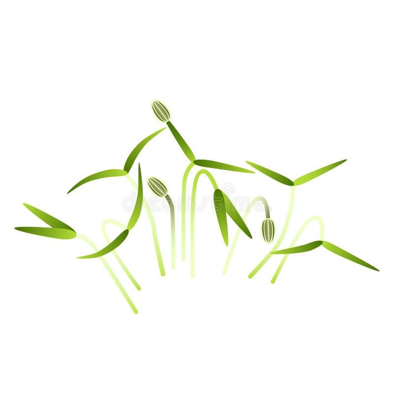 Microgreens-Fenchel B?ndel Anlagen Wei?er Hintergrund stock abbildung