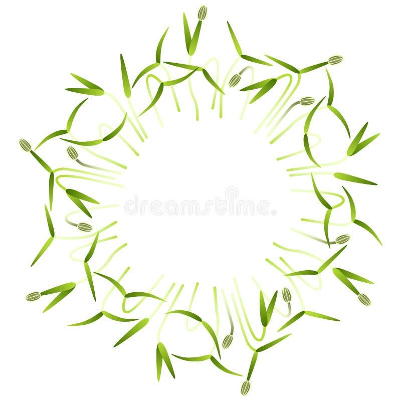 Microgreens-Fenchel Vereinbart in einem Kreis Wei?er Hintergrund vektor abbildung