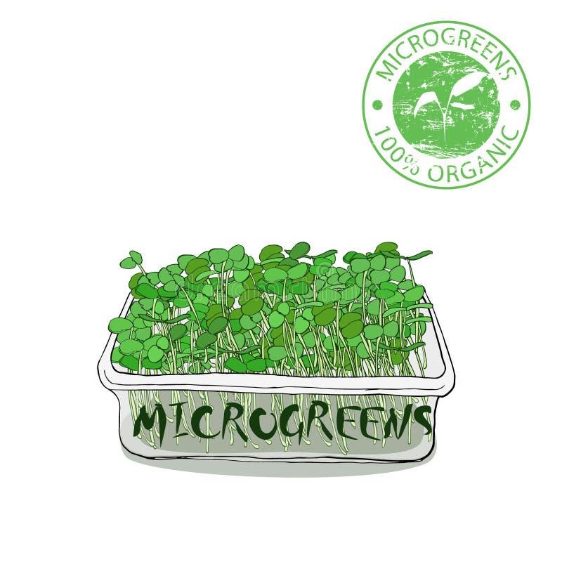 Microgreenspruiten voor gezond voedsel royalty-vrije illustratie