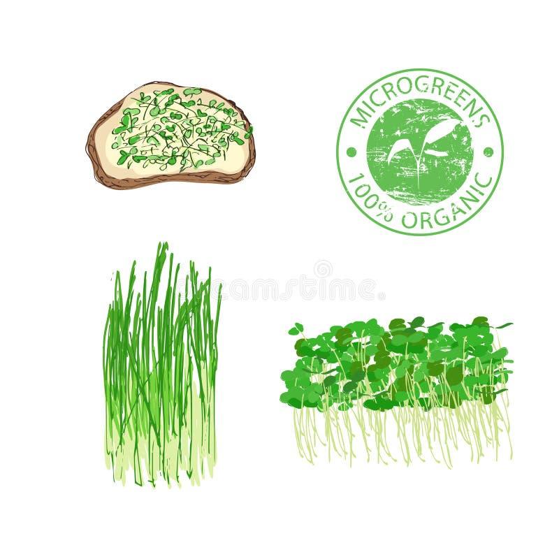 Microgreenspruiten voor gezond voedsel vector illustratie