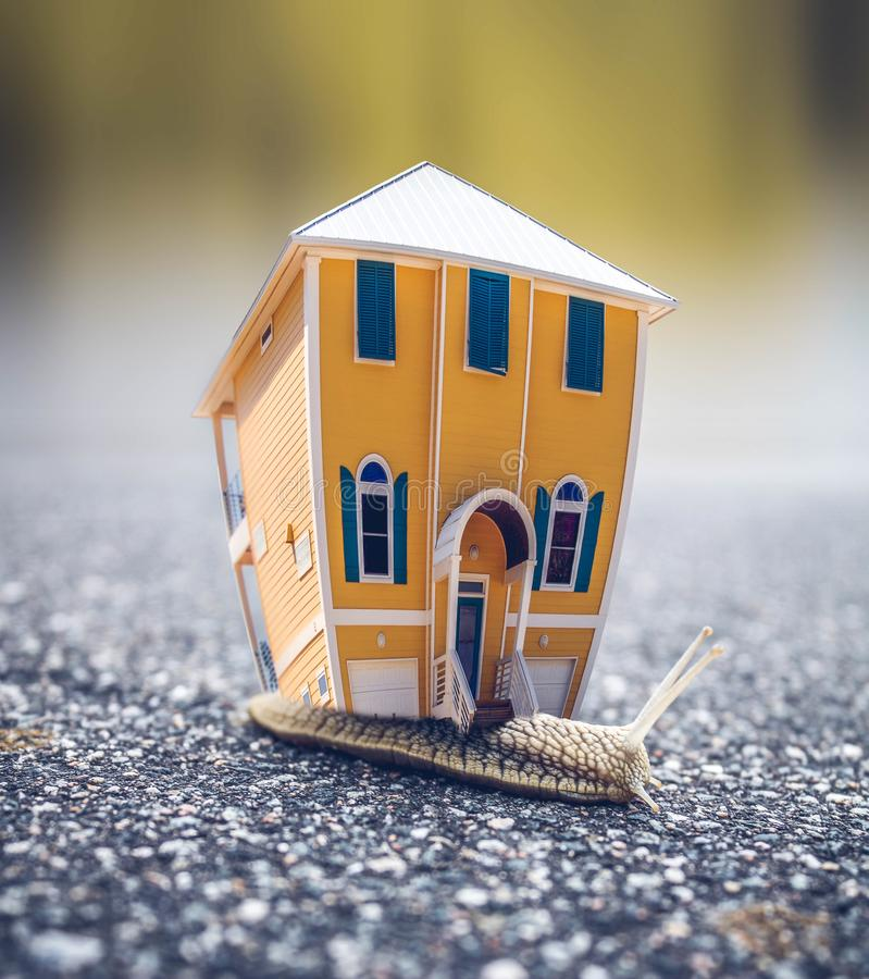 Microphotography of Orange and Blue House Miniature on Brown Snail's Back stock images