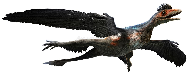 Microraptor libre illustration