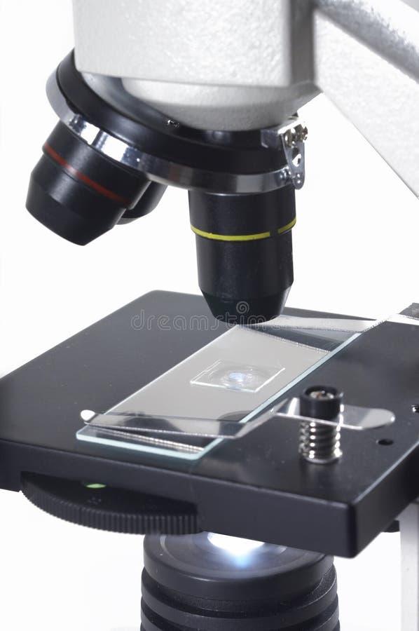 Microscópio da pesquisa imagens de stock royalty free