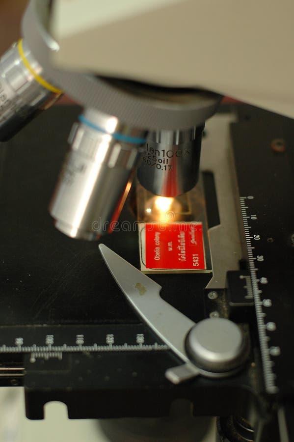 Microscope à la classe de la Science images libres de droits
