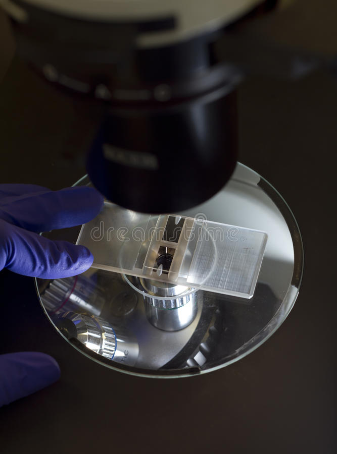 Microscope slide royalty free stock photos