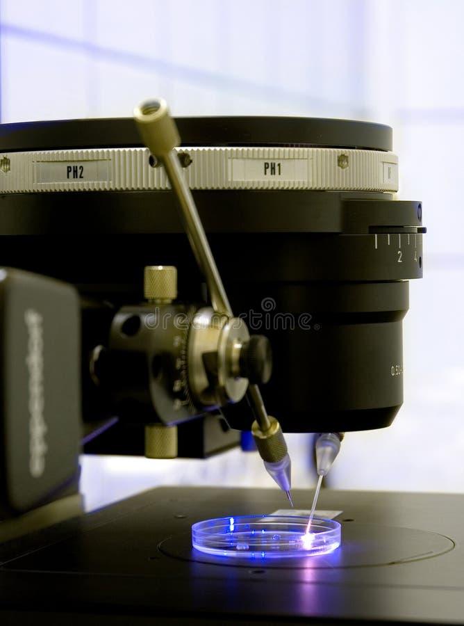 Microscopia de fluorescência fotos de stock royalty free