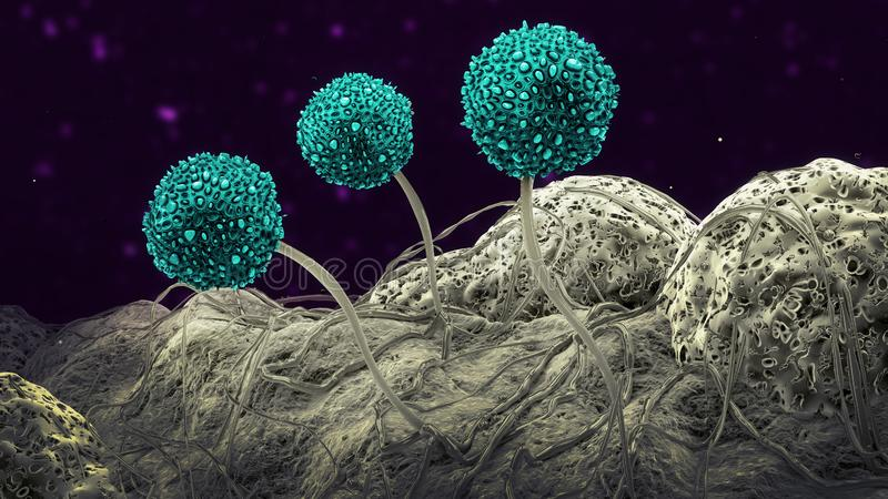 Microscopic image of growing molds or mold fungus and spores. 3d illustration royalty free stock image