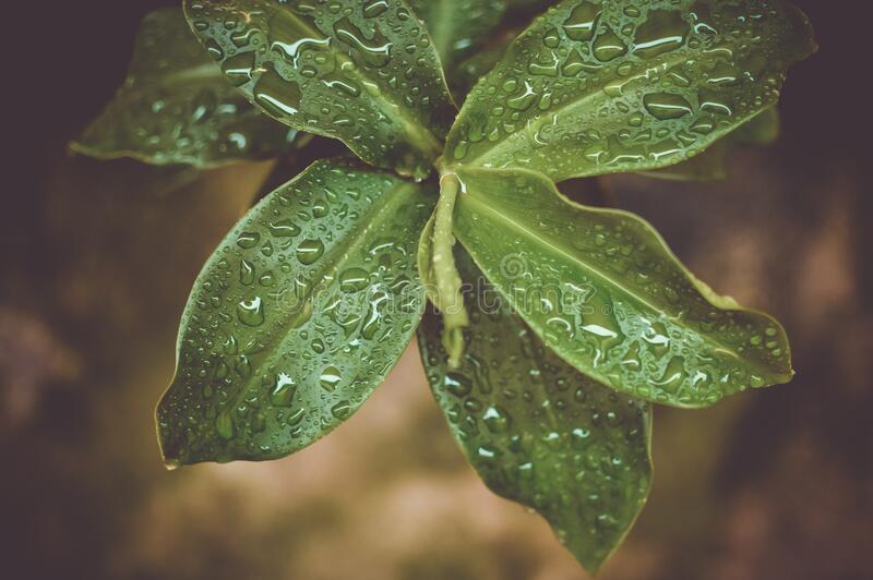 Microshot Photography on Green Plant royalty free stock photography