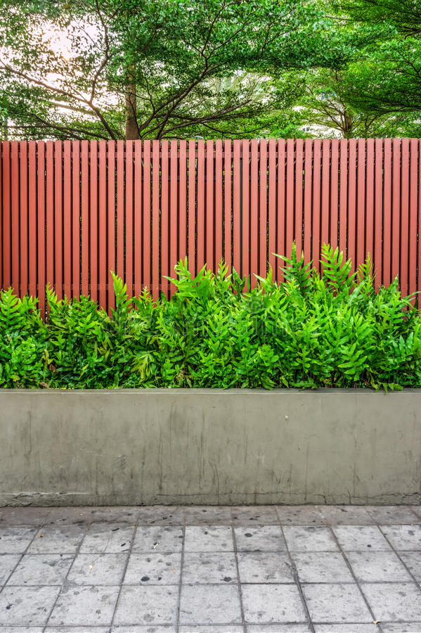 Microsorum punctatum fern, batten wooden fence and pavement. The small garden for exterior decoration royalty free stock images
