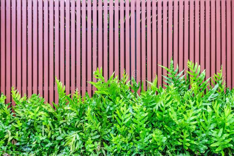Microsorum punctatum fern and batten wooden fence. The small garden for exterior decoration royalty free stock photography