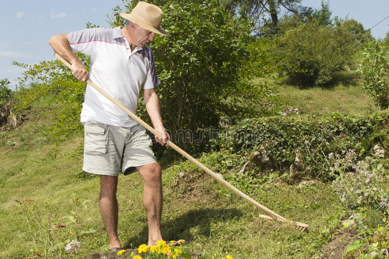 Mid Age Man Raking The Garden Royalty Free Stock Image