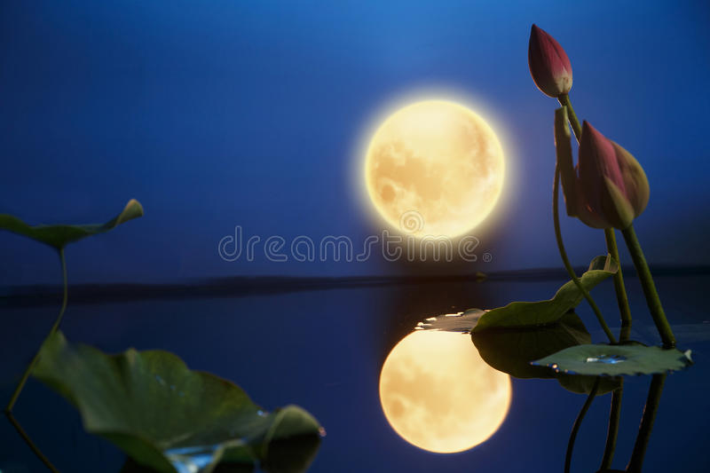 Mid Autumn Moon. In sky royalty free stock images