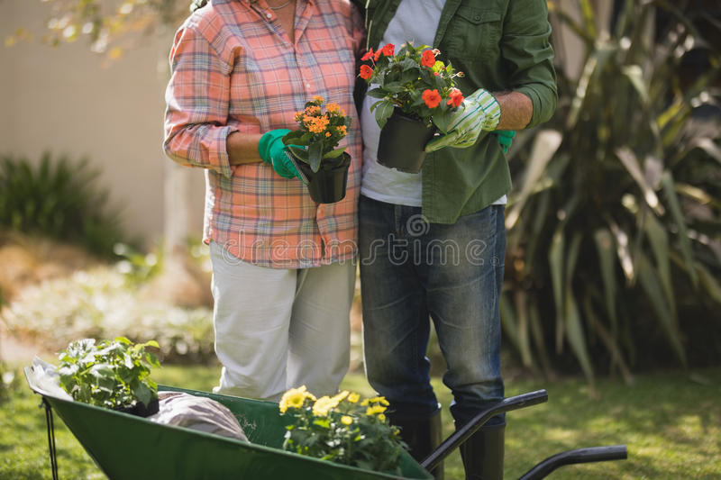Mid section of senior couple holding potted plants by wheel borrow in yard royalty free stock photo
