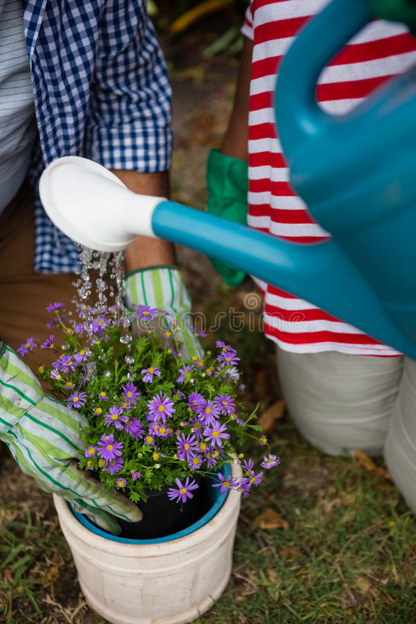 Mid section of senior couple planting in backyard stock photo