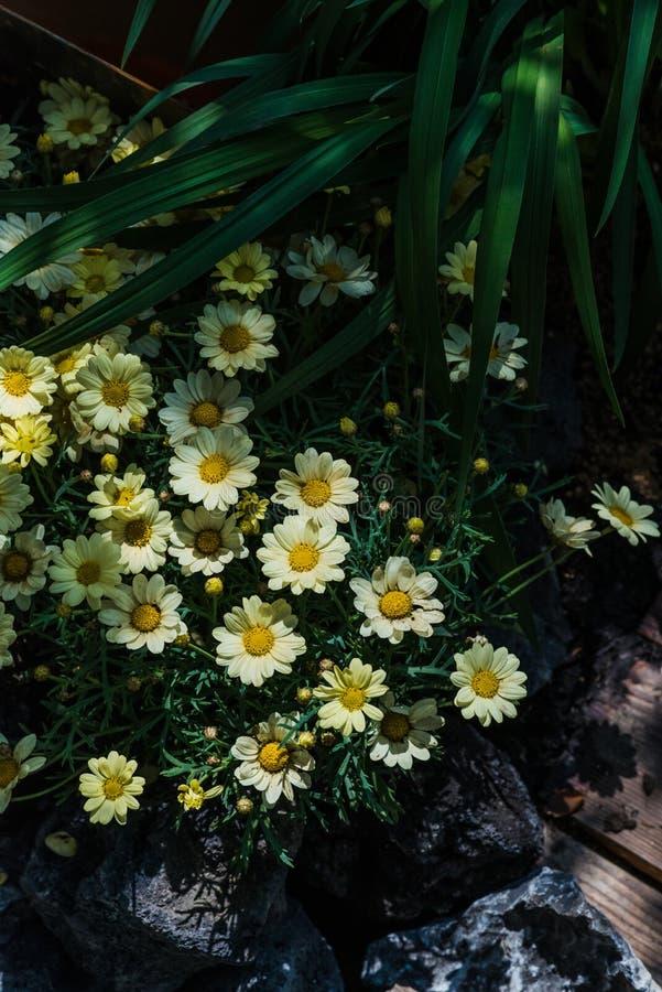 Middag mooie bloemen in de zonneschijn stock illustratie