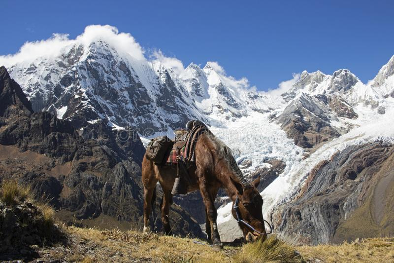 Middagpauze in de Bergen van de Andes royalty-vrije stock foto's