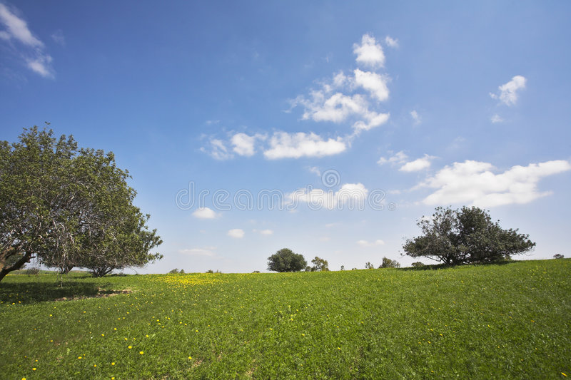 Download Midday On Blossoming Hills Royalty Free Stock Images - Image: 8799549