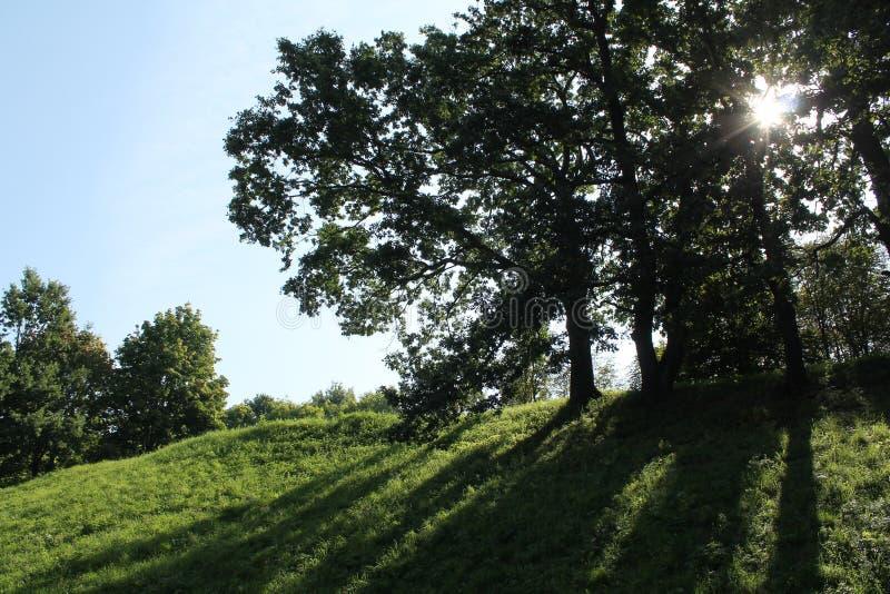 Midday lata krajobraz z dębami przeciw słońcu Drzewa ciska cień w parku zdjęcie stock