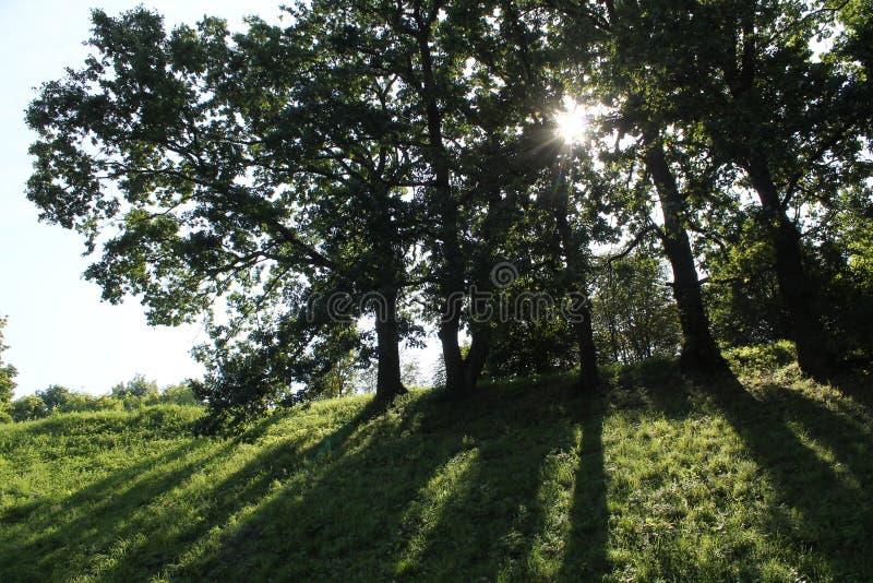 Midday lata krajobraz z dębami przeciw słońcu Drzewa ciska cień w parku obraz royalty free