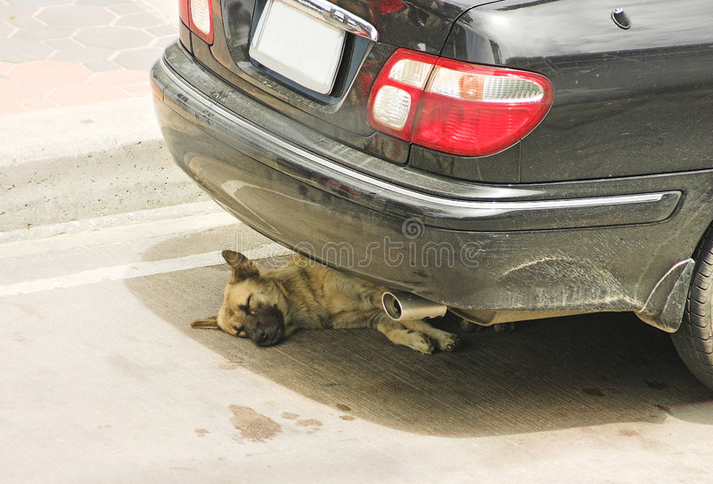 Download Midday rest stock image. Image of hide, sidelight, tailpipe - 969389