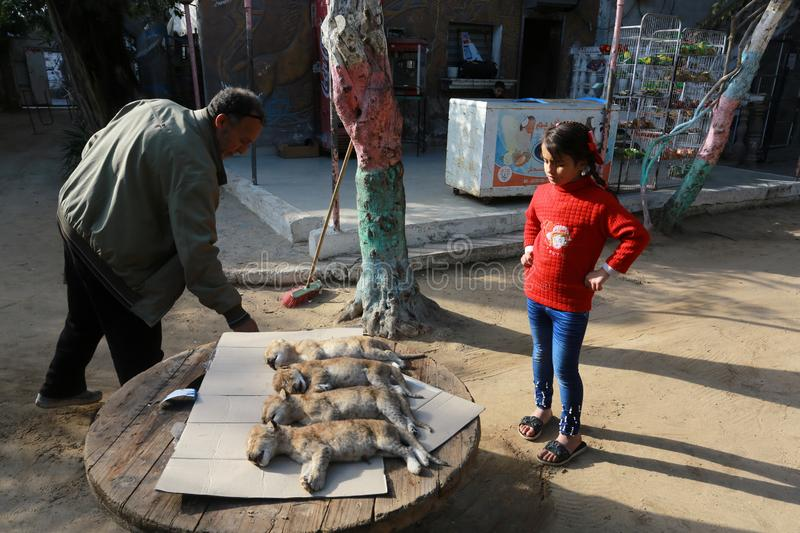 MIDDEL EAST. Palestinias look at the dead bodies of four newly born lion cubs prior to their burial at a zoo, in Rafah, in the southern Gaza Strip on January 18 stock images