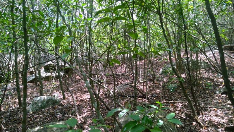 Middel van het bos royalty-vrije stock foto