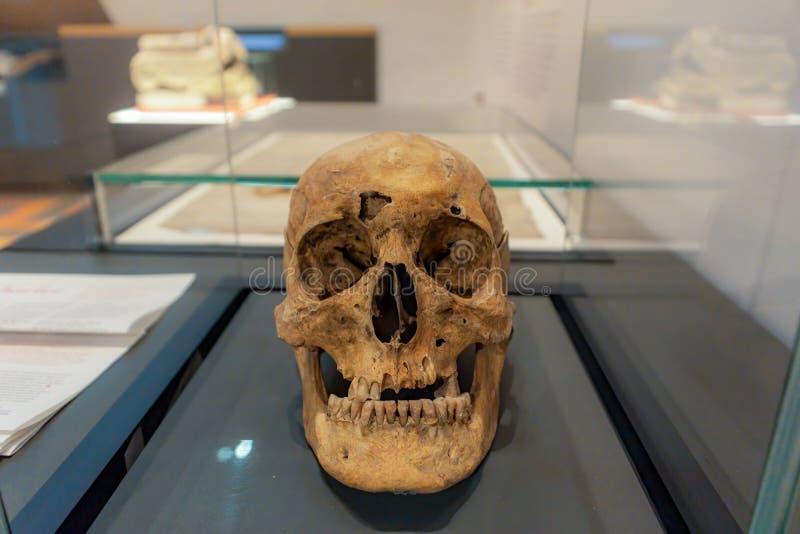 Middeleeuwse schedel stock foto's