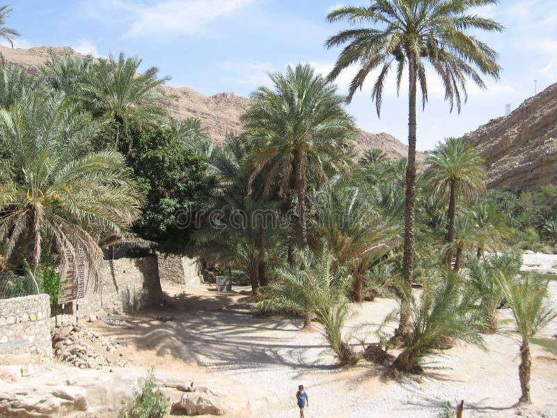 Midden-Oosten of Afrika, schilderachtige het landschapsfotografie van palmenlandschappen royalty-vrije stock foto
