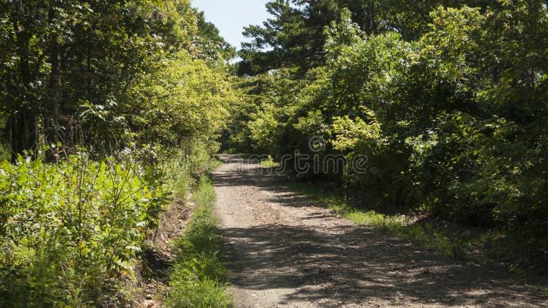 Midden van nergens landweg, één steegweg in een bos stock afbeelding