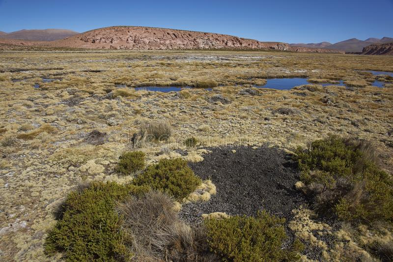 Midden w Lauca parku narodowym, Chile fotografia stock