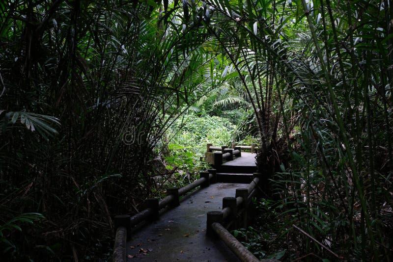 Middenweg in bos met tunnellicht royalty-vrije stock afbeelding