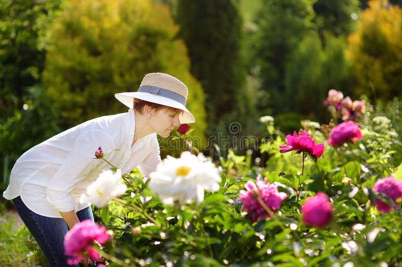 Middle age female gardener sniffs fresh peony royalty free stock images