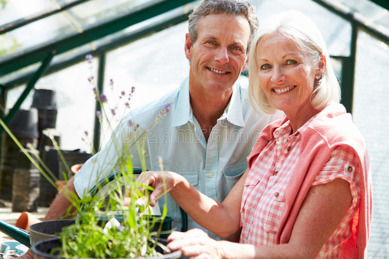 Middle Aged Couple Working Together In Greenhouse. Close Up Of Happy Middle Aged Couple Working Together In Greenhouse Smiling To Camera
