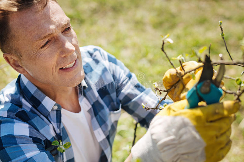 Middle aged man pruning trees in spring. Real man labour. Mature guy wearing gloves working in a garden and pruning the branches of a tree in a sunny day royalty free stock image