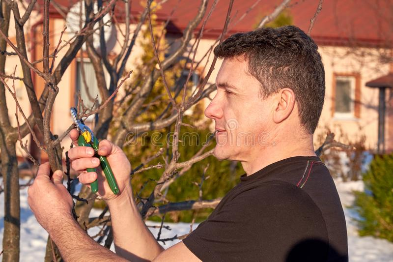 Middle aged man with shears in hand pruning tree branches in early spring. Closeup view stock photos