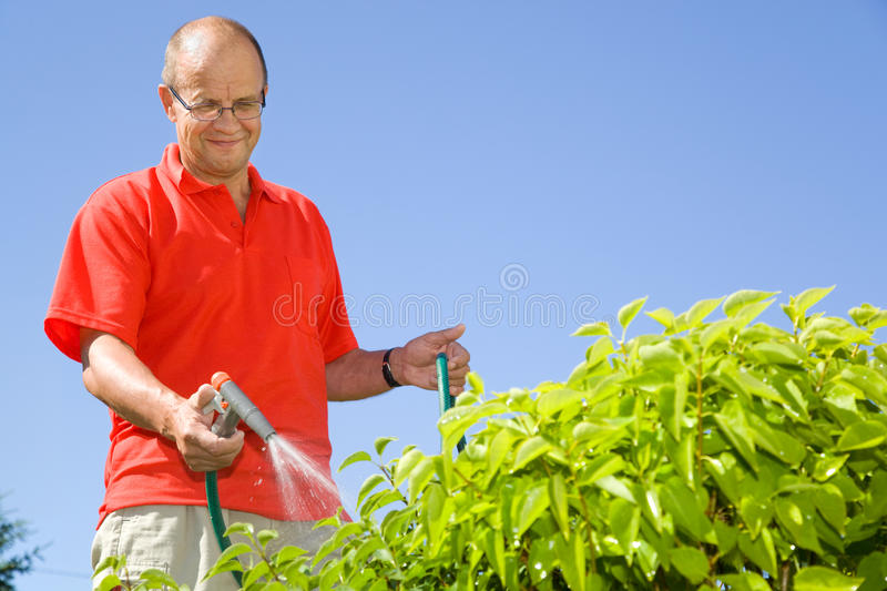 Middle-aged man watering plants stock photography