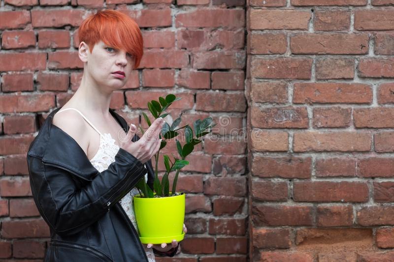 A middle-aged woman in a white dress holding a plant pot zamiokulkas royalty free stock images